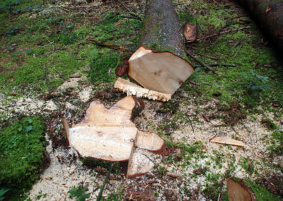 Baumfällen | Kollmannsberger Prien | Forstbetrieb Brennholz Winterdienst