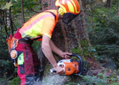Holzeinschlag | Franz Kollmannsberger Prien | Forstbetrieb Brennholz Winterdienst