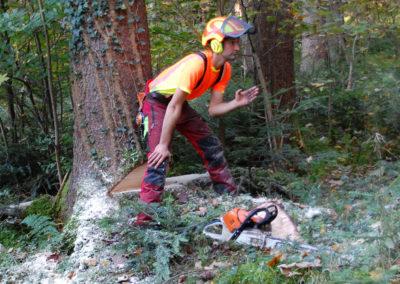 Beim Baumfällen | Kollmannsberger Prien | Forstbetrieb Brennholz Winterdienst