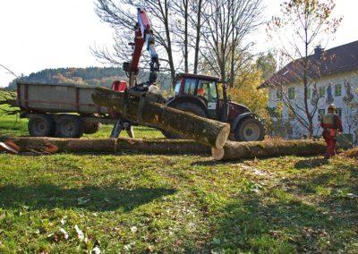 Problembaum 03 | Kollmannsberger Prien | Forstbetrieb Brennholz Winterdienst