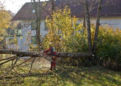 Problembaum 01 | Kollmannsberger Prien | Forstbetrieb Brennholz Winterdienst
