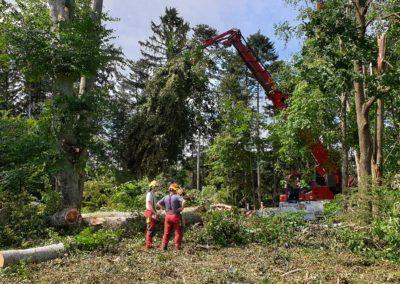 Problembaum 02 | Kollmannsberger Prien | Forstbetrieb Brennholz Winterdienst